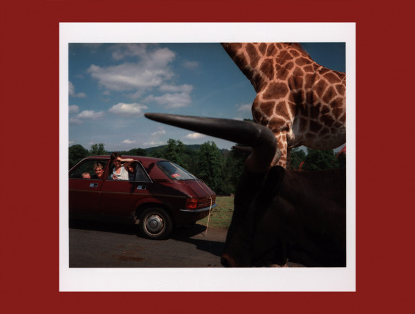 Knowsley, safari park
